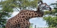 25 кадров дикой природы, которых вы точно не видели!