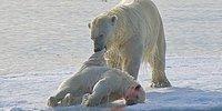 Каннибализм в дикой природе: ужасающие тайны животного мира