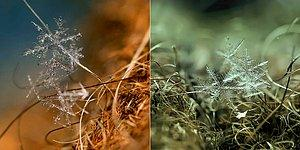 Photographer Captures Ethereal Macro Photos Of Snowlakes!