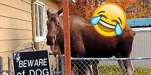 13 'Beware Of Dog' Signs Gone Completely Wrong!
