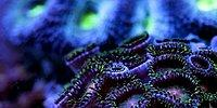 Slow Life: Video Showing The Intricate Details Of The Under Sea In Slow-Motion!
