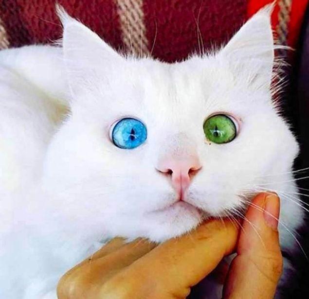 11 фото, рассказывающих о прекрасной мутации под названием гетерохромия
