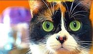 8 крутых лайфхаков для кота