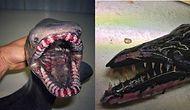 Больше в море ни ногой: жуткие существа с морского дна, найденные рыбаком Романом Федорцовым