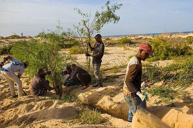 16. Moritanya'nın Nouakchott kentini yükselen su seviyesinden korumak için kum tepeleri oluşturuluyor. Şehrin %80'i 10 yıl içinde sular altında kalabilir.