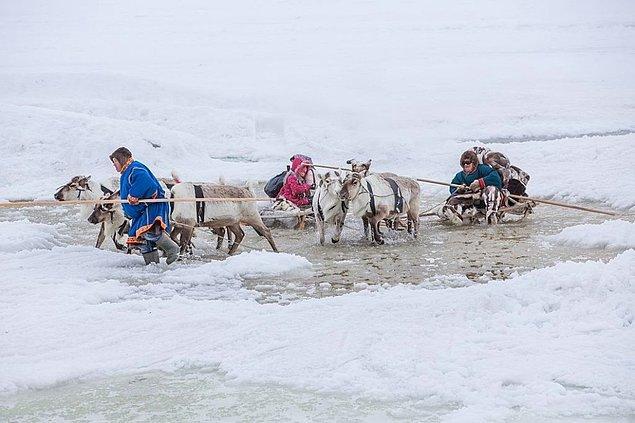 20. Sibirya'da yağmış olan karın üzerine gelen yoğun yağmurlar geyik popülasyonunu yok ediyor. 2013 yılında 61000 geyik yiyecek kaynaklarına ulaşamadığı için hayatını kaybetmişti ve bu rakamın artması bekleniyor.