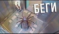 Самые страшные приколы! Паук гигант в лифте!