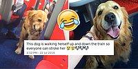 15 Funniest Dog Tweets Of 2016 You Shouldn't Miss!