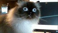 10 лучших твитов о котах за 2016 год