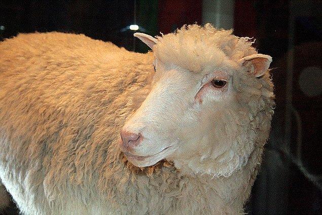 24. Klonlanan ilk hayvan olan Dolly'nin dört klonu, önemli bir sağlık problemleri olmadan sağlıklı bir biçimde yaşlandı.