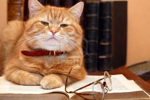 Geçtiğimiz Eylül ayında Evrimsel Psikoloji Dergisi'nde yayınlanan araştırmada kediler insana 'kölelik fantezisini' sevdiren bir etki yaratabiliyor.