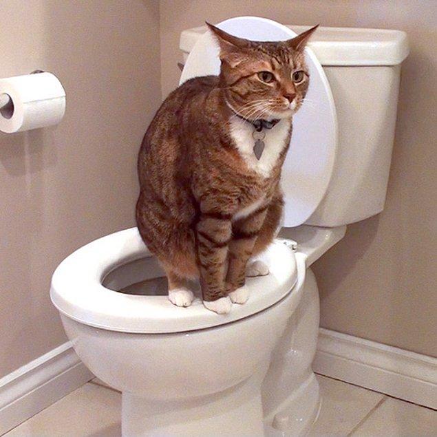 Elbette bu demek olmuyor ki her kedi kakasına yaklaşan insan BDSM'ci olacak...