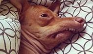 """16 собачьих фото, глядя на которые вы скажете """"Это я 1-го января!"""""""