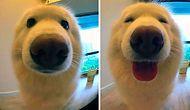 """14 животных до и после того, как их назвали """"хорошим мальчиком"""""""