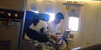 Мне бы в небо: 11 смешных и курьёзных ситуаций на борту самолета
