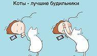 33 жизнерадостных комикса, показывающие дословно, что значит жизнь с котом