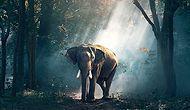Запрет на торговлю слоновьем бивнем в Китае