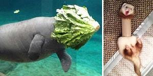25 мегаэпичных фейлов из мира животных 😅 😆