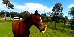 Вы никогда не будете так же счастливы, как эта лошадь с ее резиновой уточкой