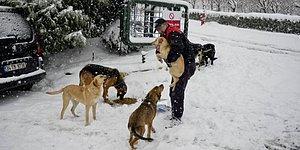 Спасение бездомных животных в холодную метель жителями Стамбула