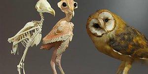 Люди увидели фото «голой» совы и теперь не могут его развидеть
