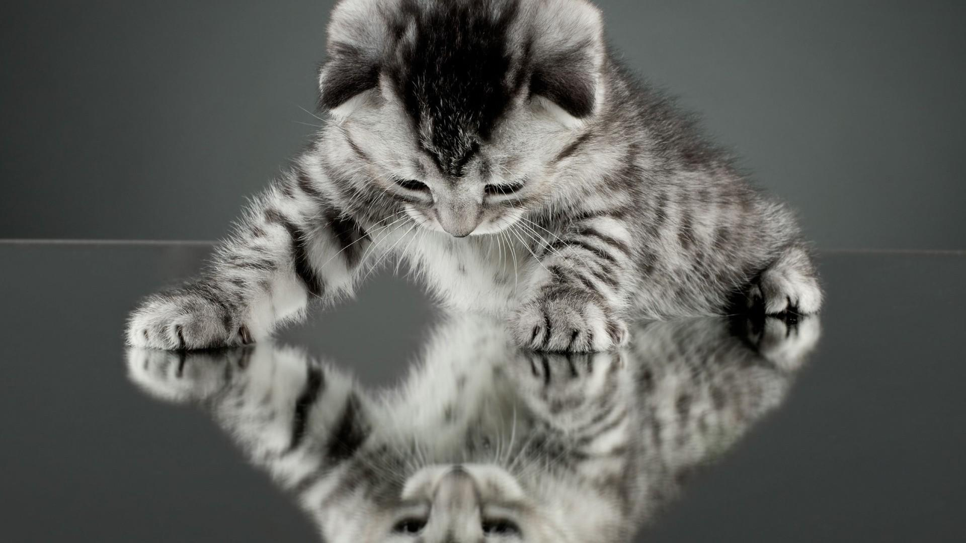 Check Out These Cats That Look Like Tigers  Tiger Foundation