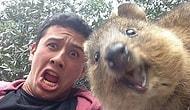17 животных и их юморные селфи, способные сделать ваш день