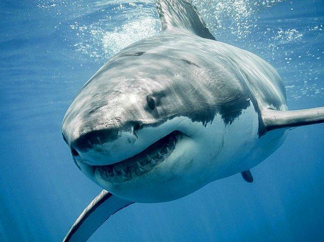 Çalışmayı yürüten araştırmacılar, bu özelliğin diğer deniz canlılarında da bulunabileceğini düşünüyorlar.