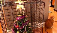 14 Pet Owners Came Up With Quite Creative Ways Of Protecting Their Xmas Trees