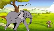 Urban Legend Cracked: Are Elephants Really Scared Of Mice?