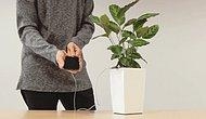 Soon You'll Be Able To Charge Your Phone With A Houseplant!