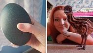 Эта девушка купила на eBay яйцо за 30 долларов, и теперь у нее по дому расхаживает страус