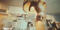 Наука с хвостом и усами: фильм о кошке и гравитации