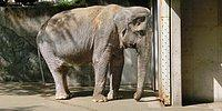 The Heart-Breaking Story Of The Loneliest Elephant, Who Died At Age 69