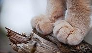 24 Adorable Cat's Paws To Boost Your Mood