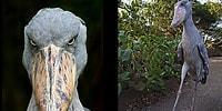 20 жутковатых существ, которые действительно существуют