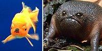 15 самых сердитых в мире животных: не становись у них на пути!