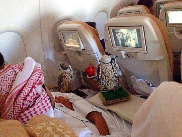 Etihad, Qatar, Emirates ve Lufthansa Havayolları ortalama 630 dolarlık bir ekstra ücretle tüylü dostunuza bilet kesiyor.