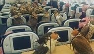 80 птиц прокатились в эконом-классе самолета: саудовский принц оплатил все билеты