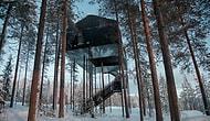 Новый вид отдыха: отель, построенный на дереве