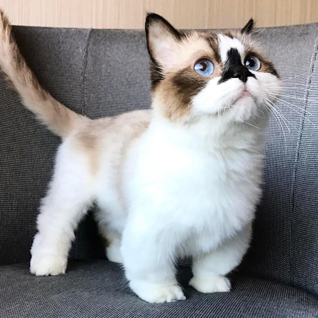 все порода мини кошек фото летнее время посетители