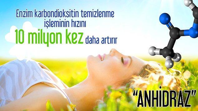 13. Anhidraz enzimi sayesinde nefes alıyoruz.