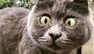 Кевин - особенный кот, который выжил вопреки всему
