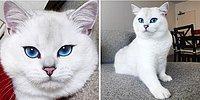 22 самые популярные кошки в мире