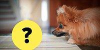 Проверьте, насколько сильна ваша интуиция. Сможете ли вы угадать, на что смотрит собака?
