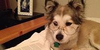 10 самых странных собачьих чудачеств