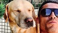 Внезапный спаситель: Криштиану Роналду помог приюту для собак