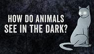 Почему животные хорошо видят в темноте?
