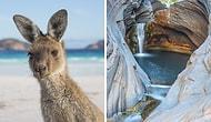 Неожиданная сторона Австралии: завораживающие фото дикой (и не очень) природы
