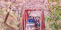 Эти магические фотографии цветущей сакуры в Японии просто завораживают!